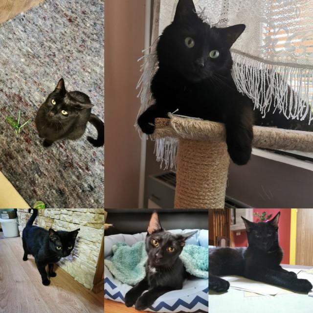 Pro bezpečný a krásný život zachráněných kočiček