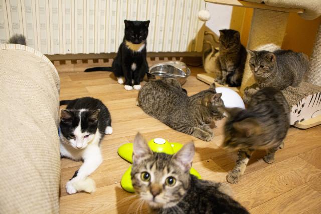 Pomozte spolku Dobré ruce dále zachraňovat kočky