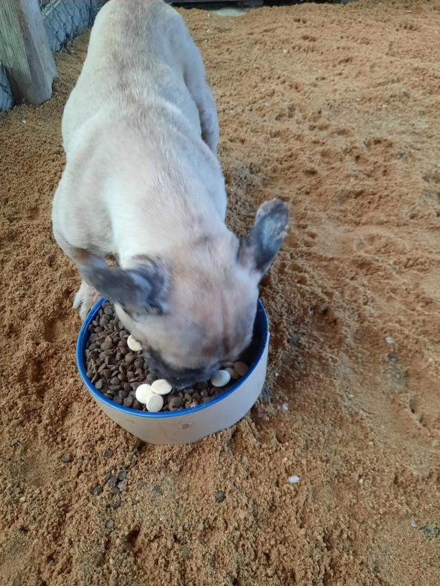 Na zakoupení areálu pro týraná zvířata