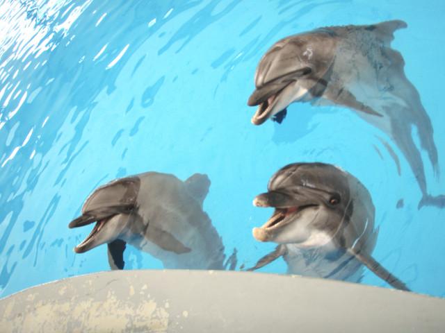 Přispěli jste na delfinoterapii pro bojovníka Sebíka