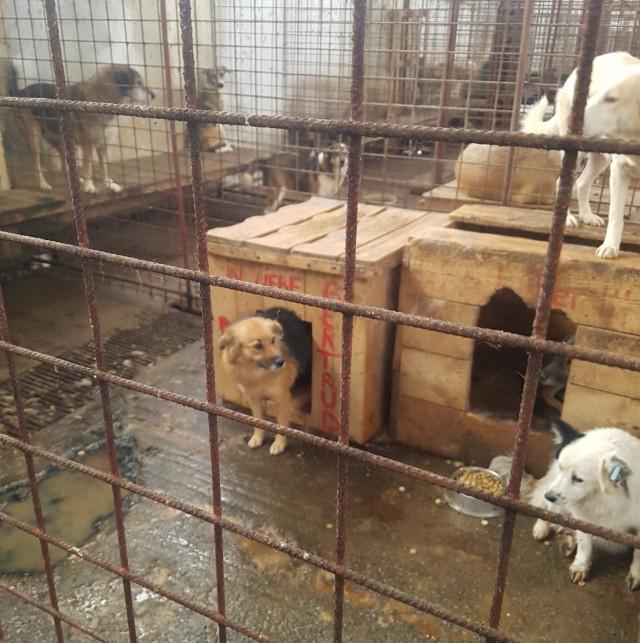 Zastavme utrpení rumunských pejsků