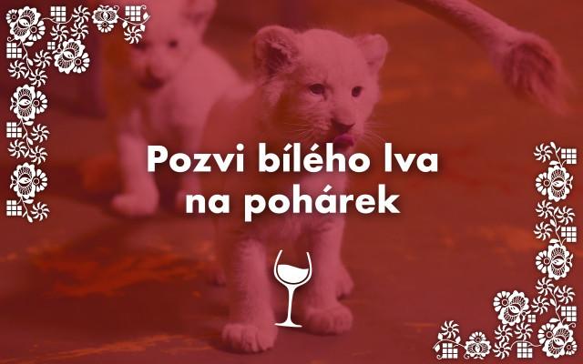 Pozvi bílého lva na pohárek