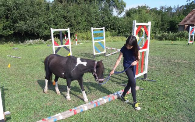 Zážitek - pomazlení, čištění a svezení na poníkovi