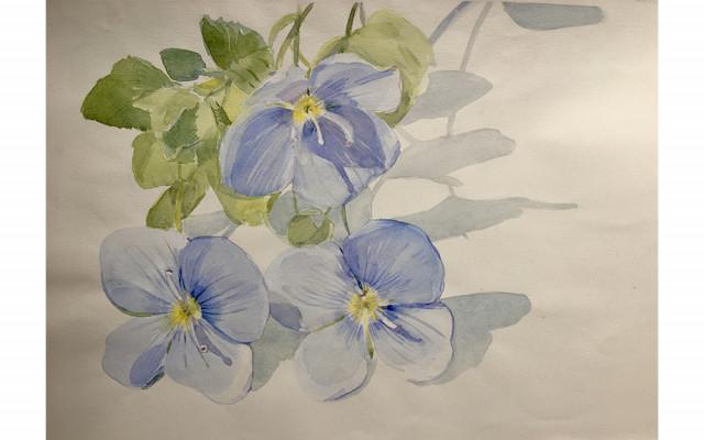 Akvarelová kresba Pavly Tiché