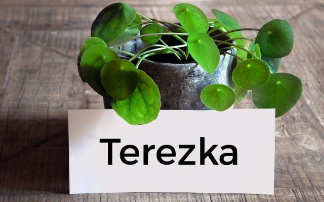 Rostlina s Vaším jménem